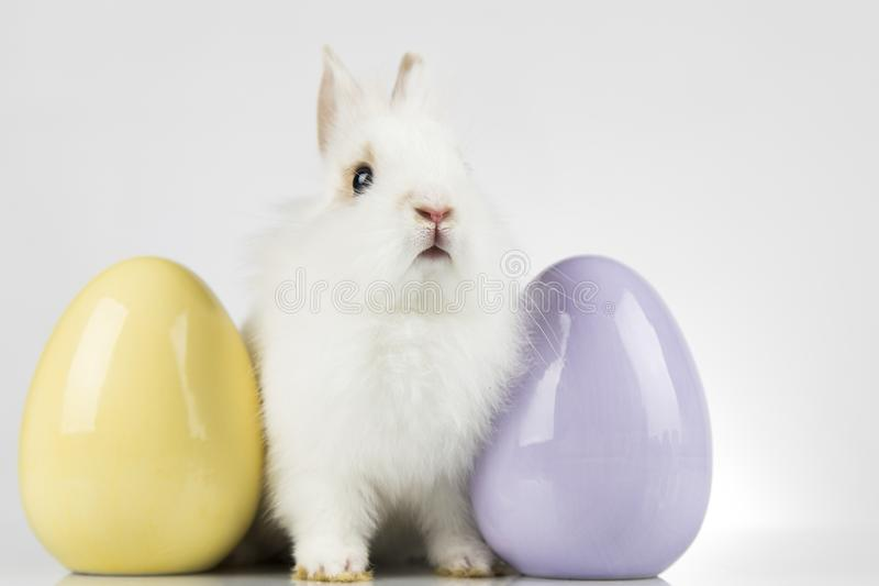 Rabbit, Bunny and easter Egg and white background stock photography