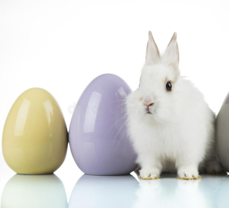 Rabbit, Bunny and easter Egg and white background royalty free stock photo