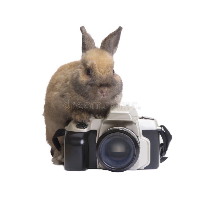 Rabbit and camera. stock image