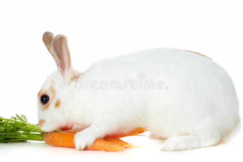 Download Rabbit with carrots stock photo. Image of juicy, fluffy - 15738218