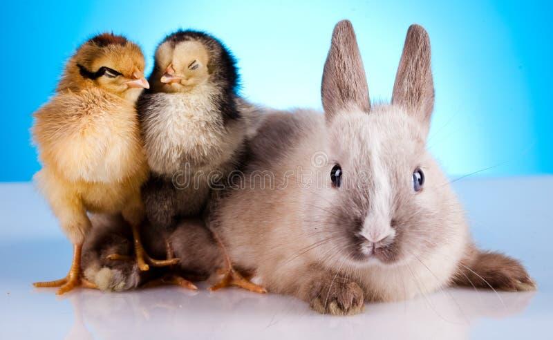 Rabbit&chick, thème lumineux coloré de printemps photo stock