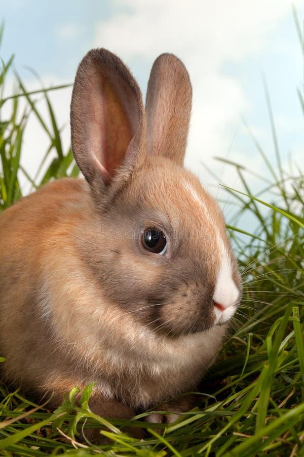 Rabbit closeup stock images