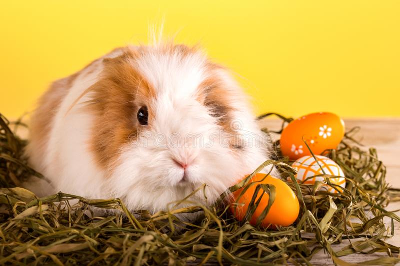 Rabbit and colorful easter eggs on a wooden background stock image