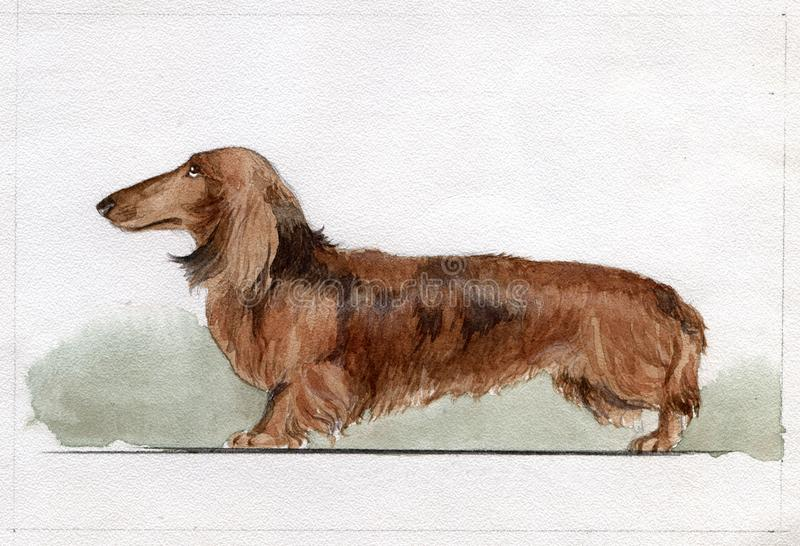 A rabbit dachshund painted in watercolor in profile royalty free stock photos