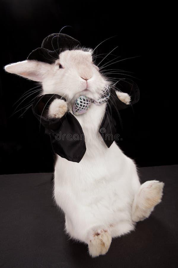 Download Rabbit dancing stock image. Image of active, classic - 26534307