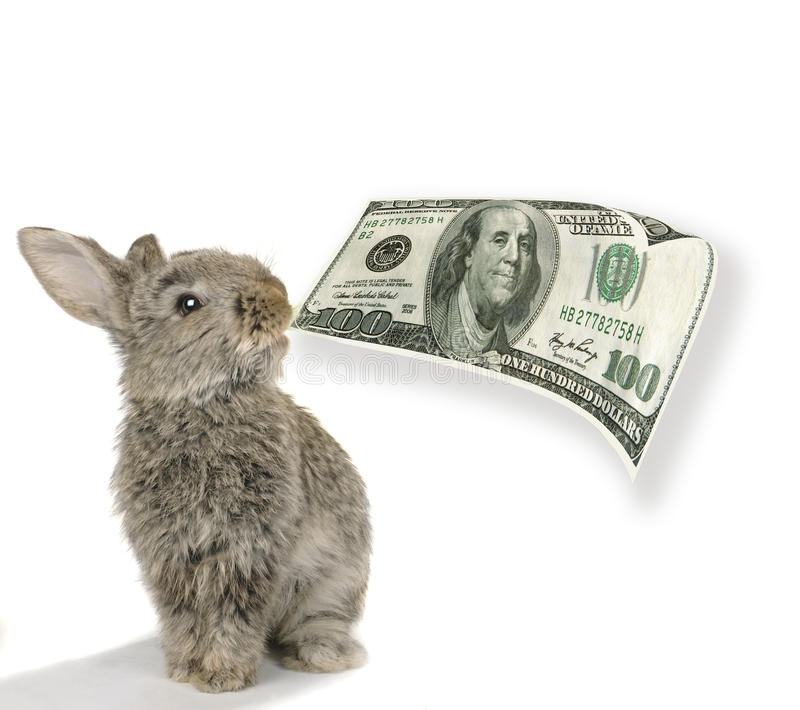Rabbit with dollar stock photography