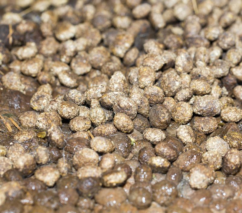 Rabbit droppings. In the park in nature stock photography