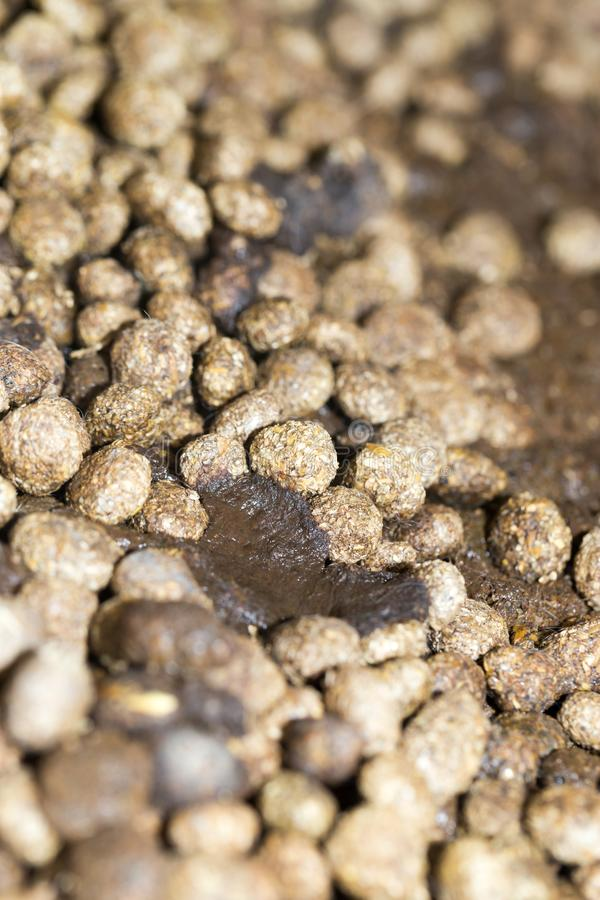 Rabbit droppings. In the park in nature royalty free stock images