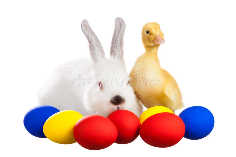 Rabbit and duckling with Easter eggs royalty free stock photo