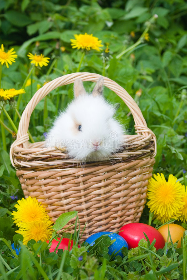 The rabbit and easter eggs stock photos