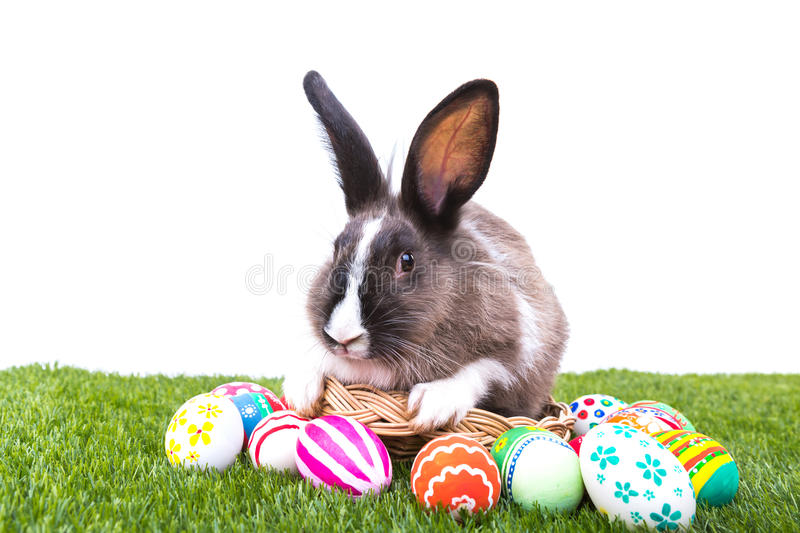 Rabbit and easter eggs stock images