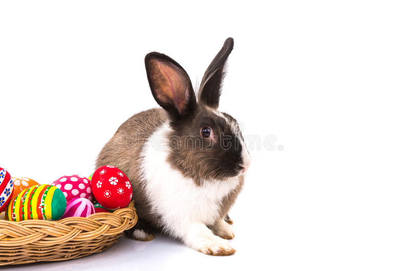 Rabbit with Easter eggs isolated royalty free stock images