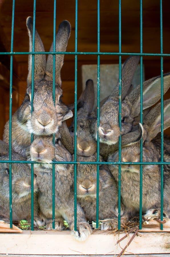 Rabbit family royalty free stock photo