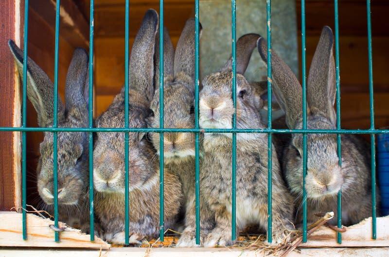 Rabbit family royalty free stock photos