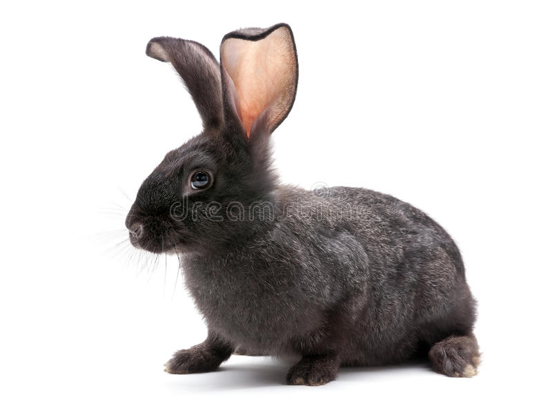 Download Rabbit farm animal stock photo. Image of bunny, hare - 20562948