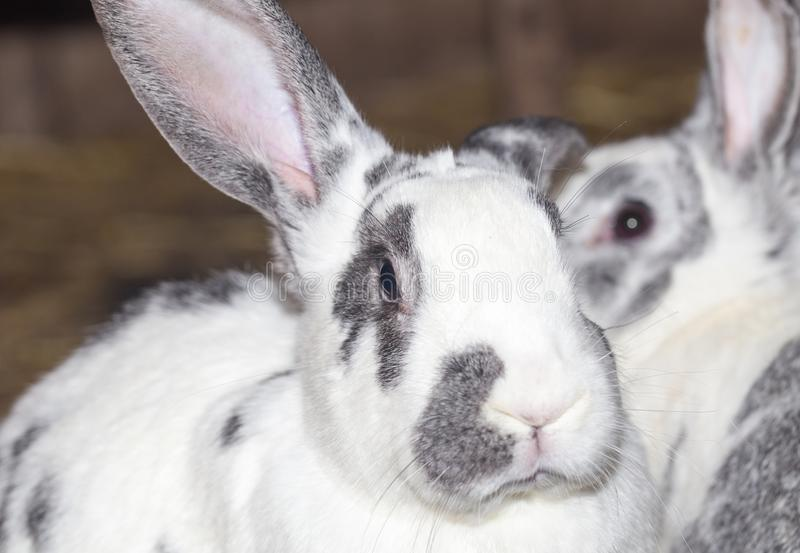Rabbit on the farm stock photo