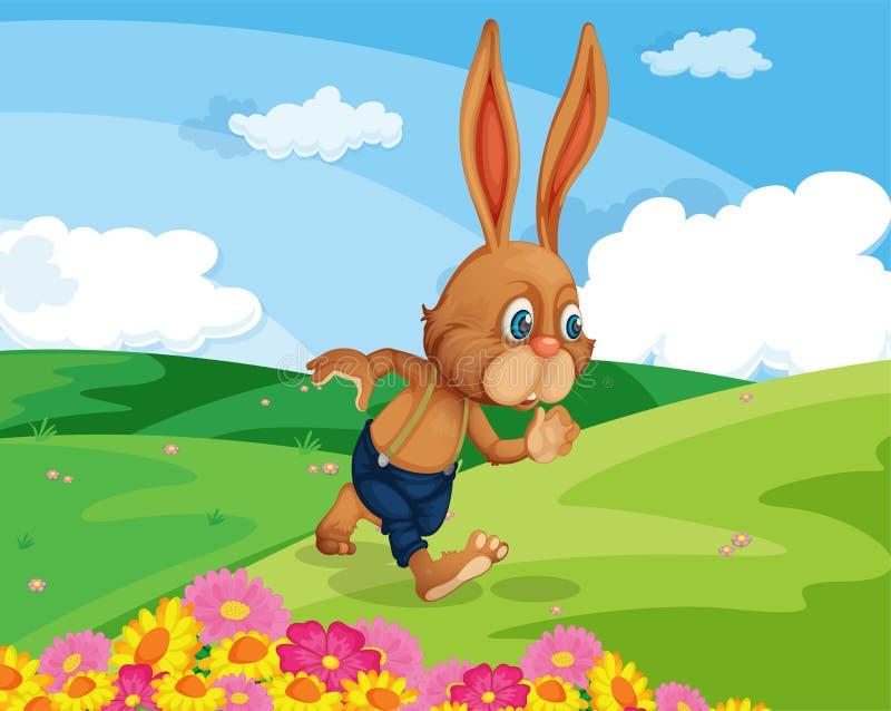 Rabbit in field stock illustration