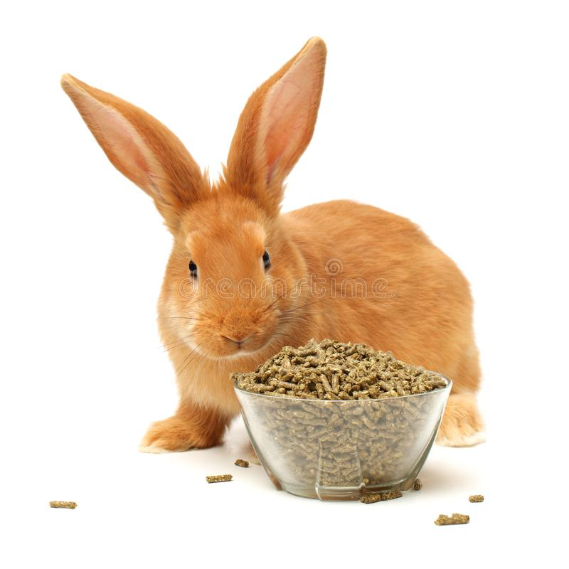 Rabbit food pellets and brown rabbit. Isolated on white background stock photography