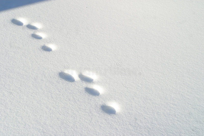 Rabbit footprints in snow stock photo