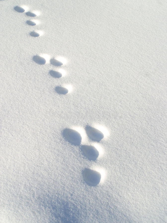 Rabbit footprints in snow