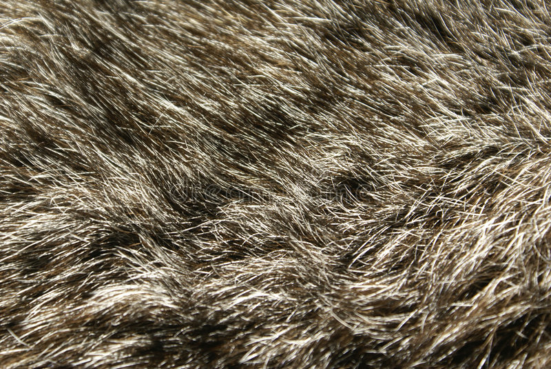 Rabbit Fur stock image