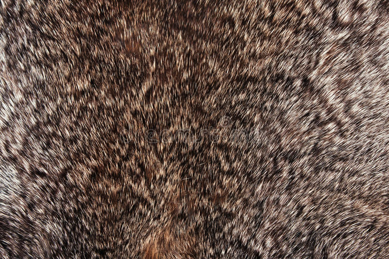 Download Rabbit Fur Texture Stock Photos - Image: 13368823