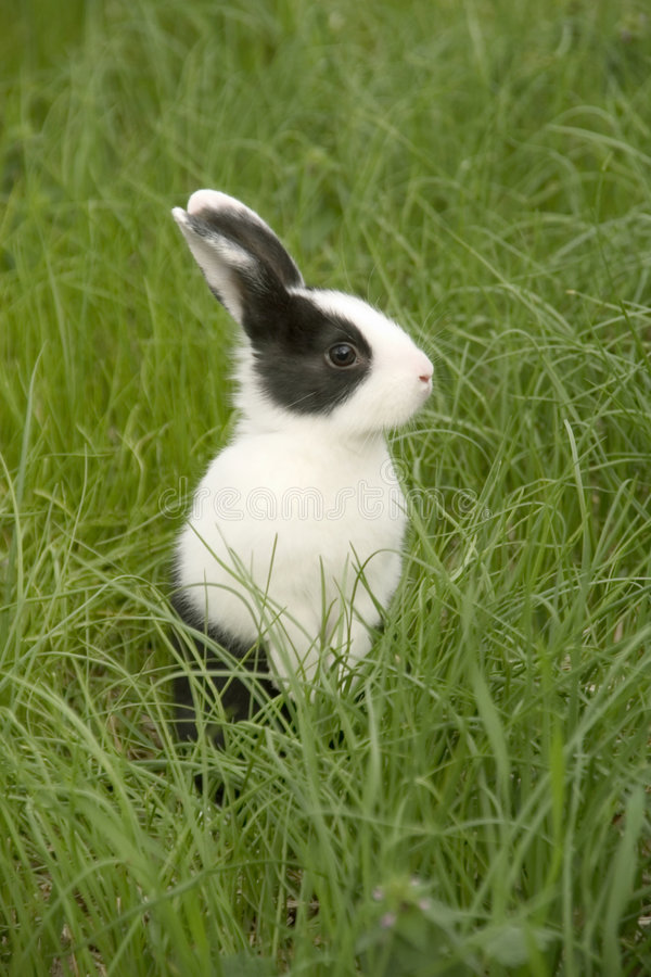Download Rabbit in the grass stock image. Image of curious, grass - 2803241