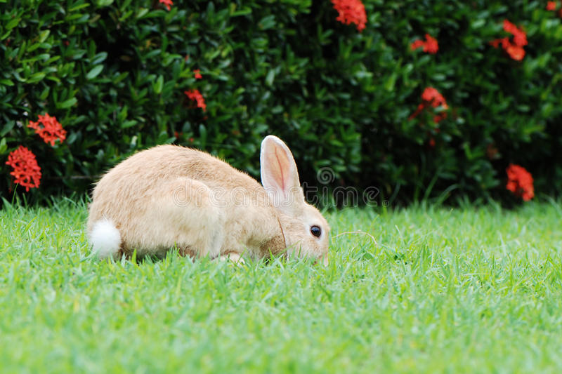 Download Rabbit on the grass stock photo. Image of themes, rabbit - 32566786
