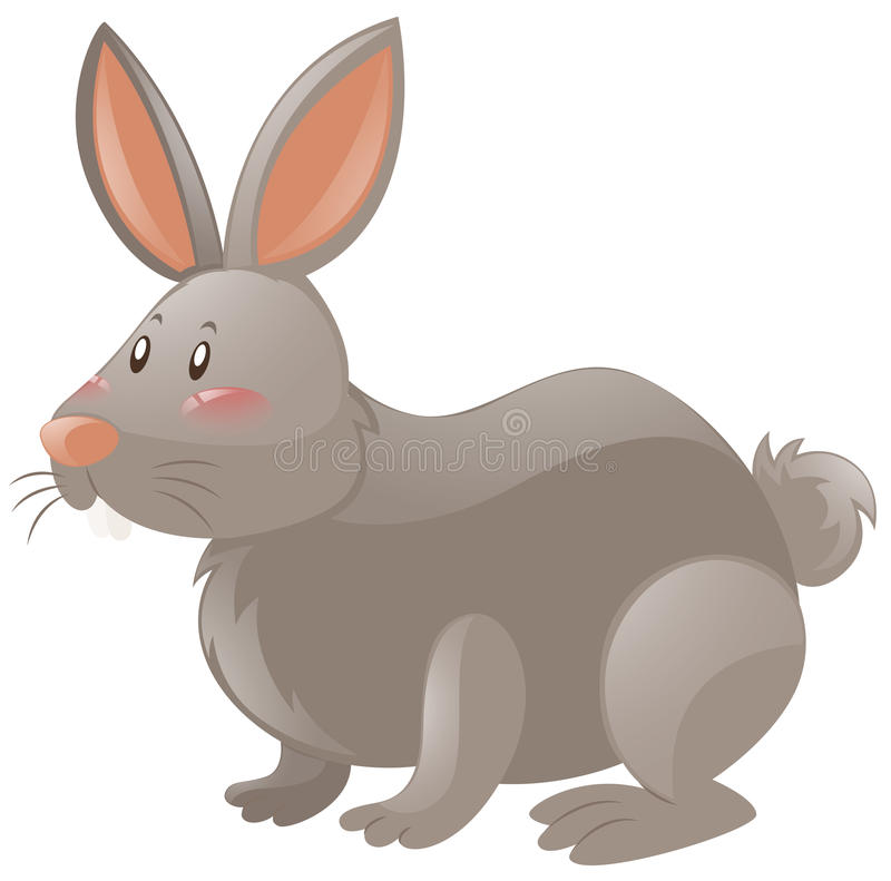 Rabbit with gray fur vector illustration