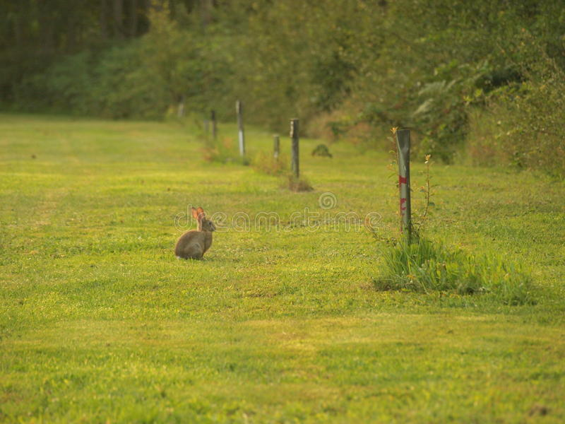 Rabbit in green grass stock photo