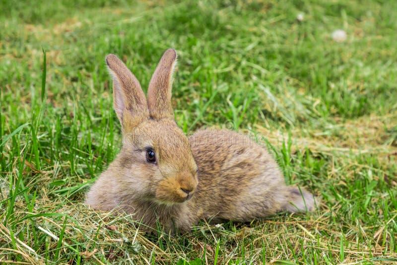 Rabbit on green grass. stock photography