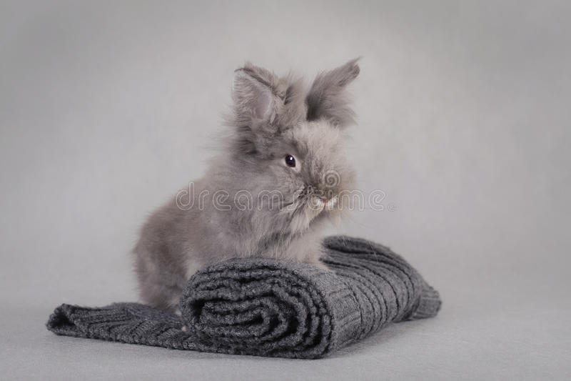Download Rabbit at grey background stock photo. Image of ears - 22511564