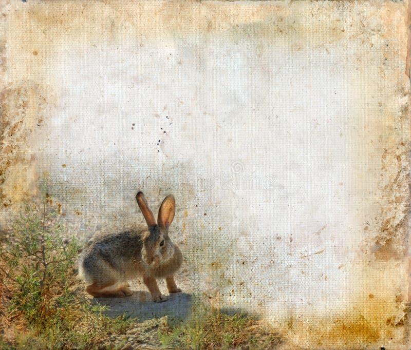 Download Rabbit On A Grunge Background Stock Illustration - Illustration of painterly, grunge: 7053709