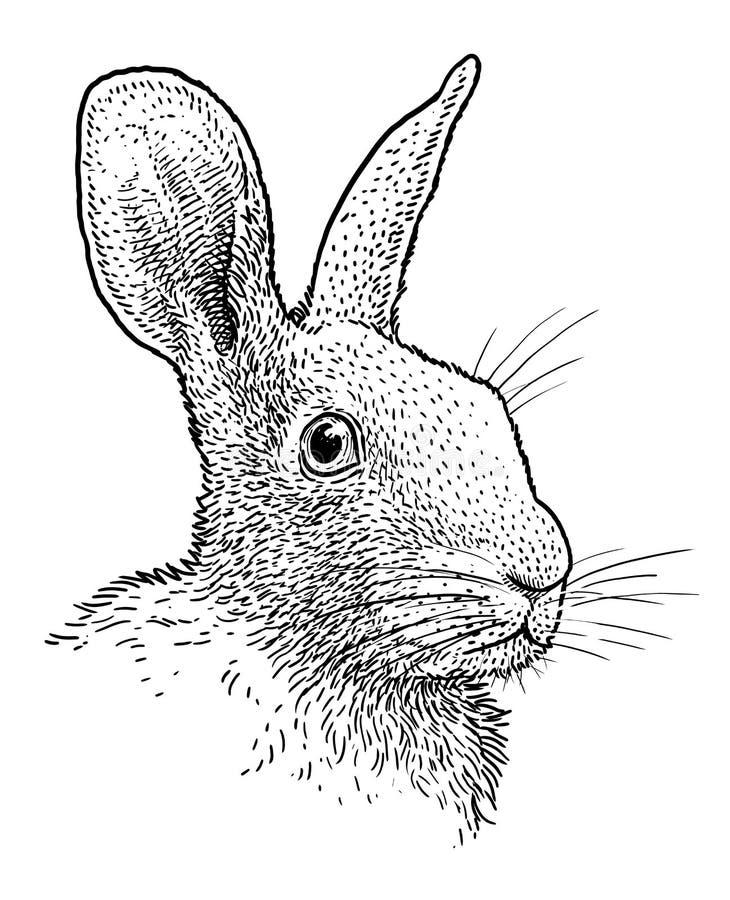 Rabbit head portrait illustration, drawing, engraving, ink, line art, vector vector illustration