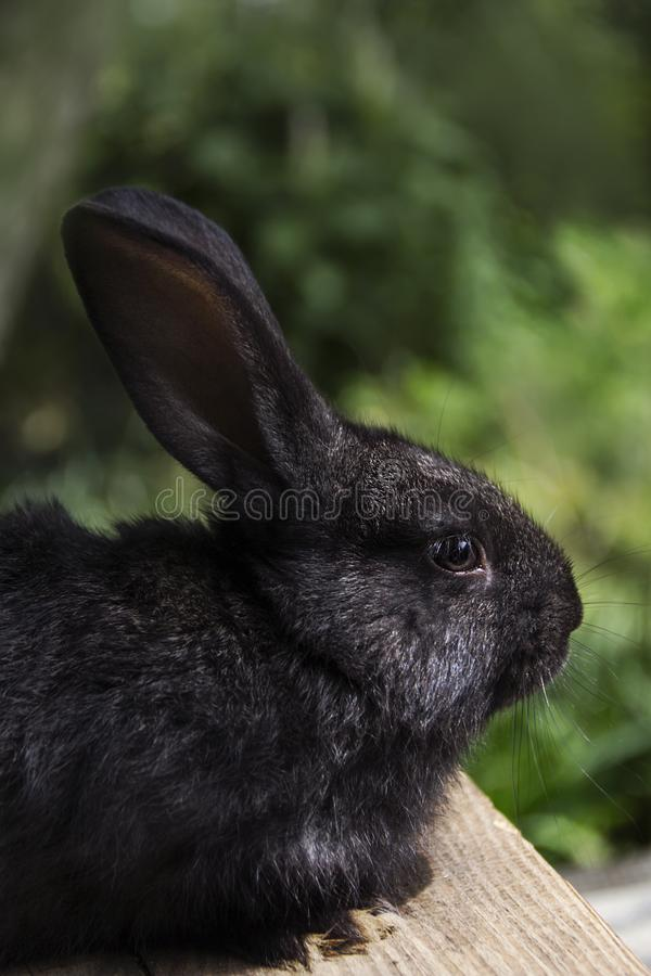Rabbit home on the plot closer to the natural environment royalty free stock photos