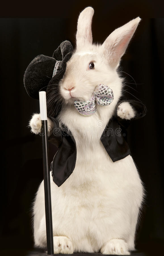 Free Rabbit In Top Hat And Tuxedo With Stic Royalty Free Stock Images - 18778129