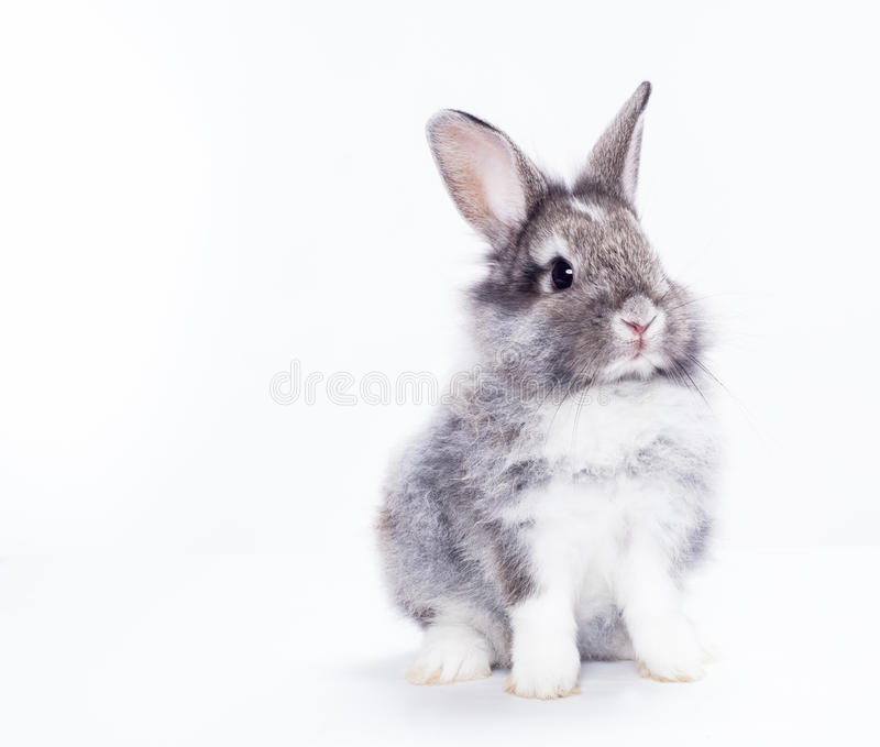 Rabbit isolated. On a white background stock photos