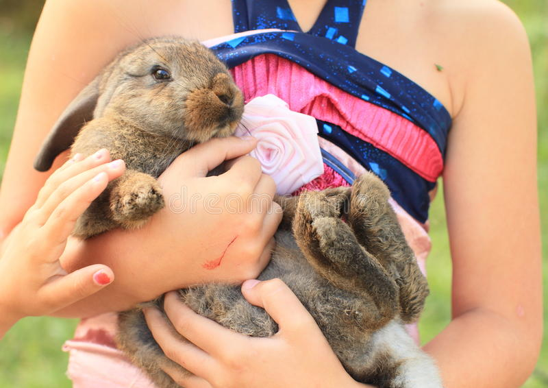 Rabbit in kids hands royalty free stock photo