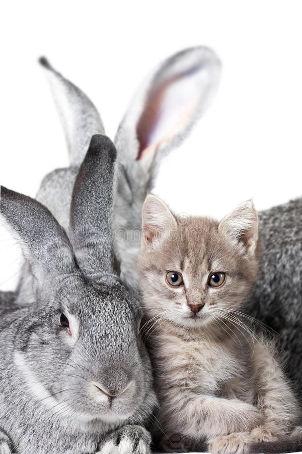 Rabbit and kitten stock photography
