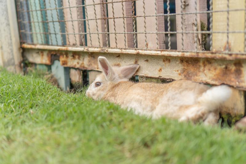 A rabbit laying down on the grass and leaning on the wooden fence stock photo