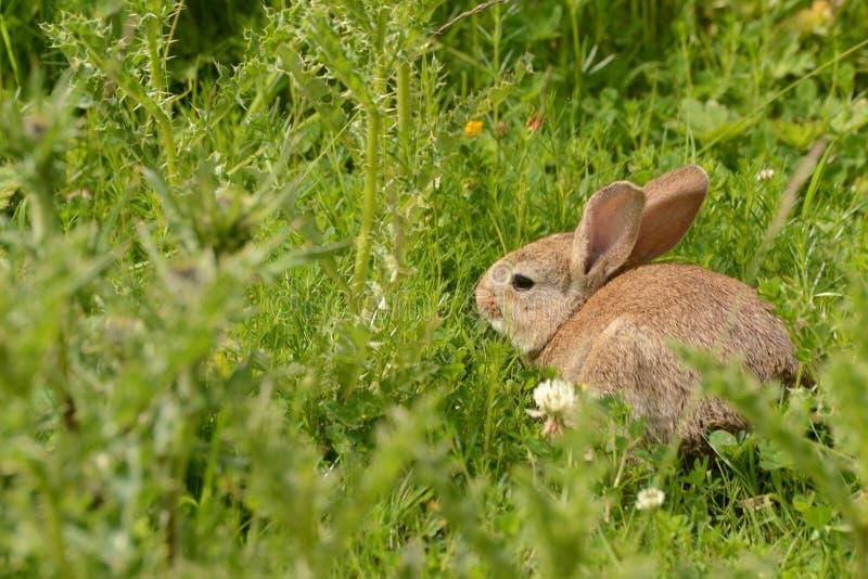 Rabbit. In long green grass stock photo