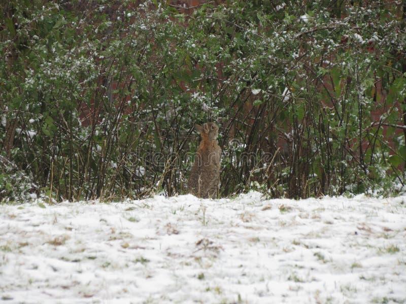 Rabbit mammal animal stock image