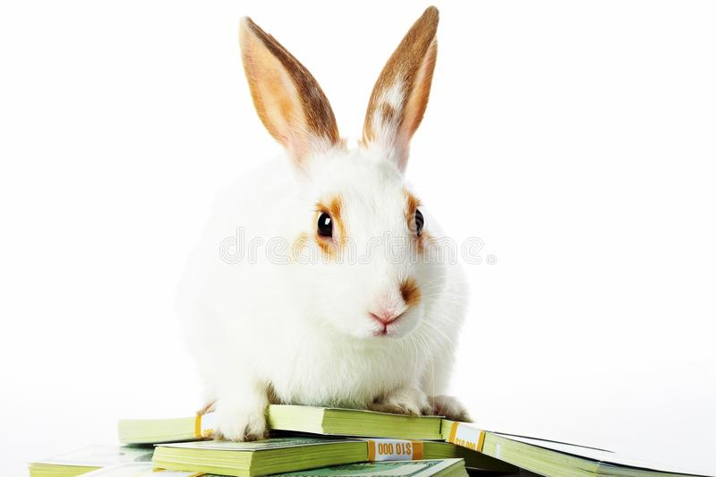 Rabbit with money stock photo