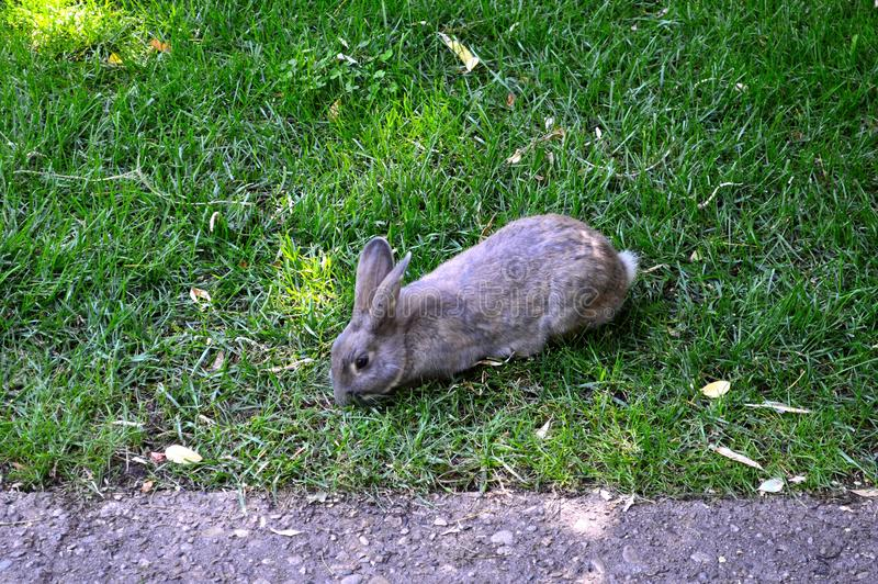 Download Rabbit On The Path At Alberston`s Park Boise Idaho Stock Photo - Image of calmly, paved: 105724672