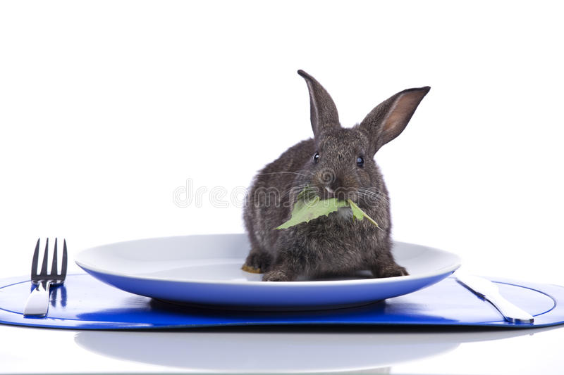 Rabbit In A Plate Royalty Free Stock Photos