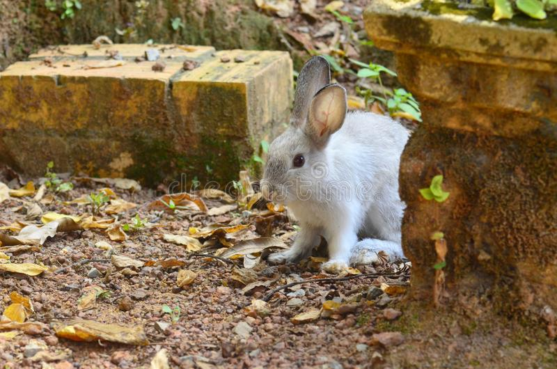 Rabbit play alone at the ground. Pet, animal, mammal, rock, stone, summer, fluffy, hairy royalty free stock image
