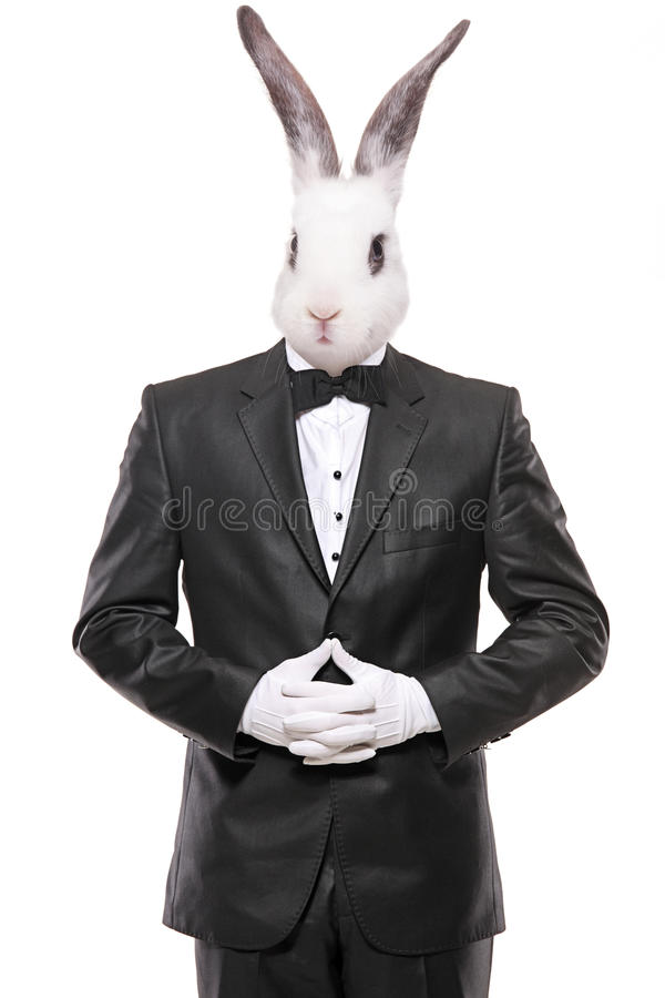Download Rabbit Posing In A Bow Tie Suit Stock Image - Image: 30045163