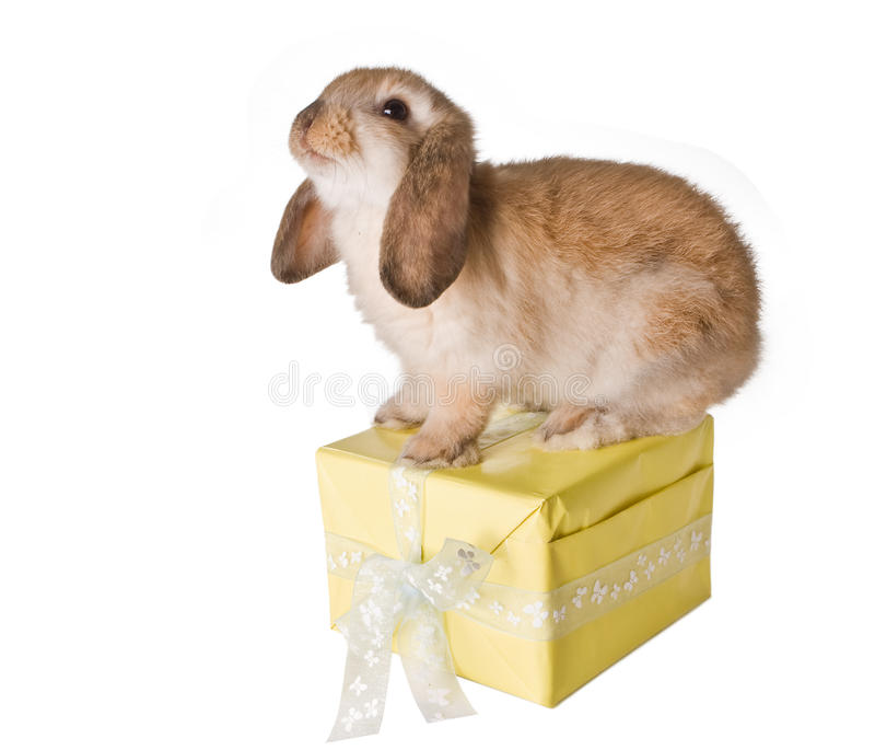Rabbit on present. Little brown easter bunny sitting on a yellow gift royalty free stock photos