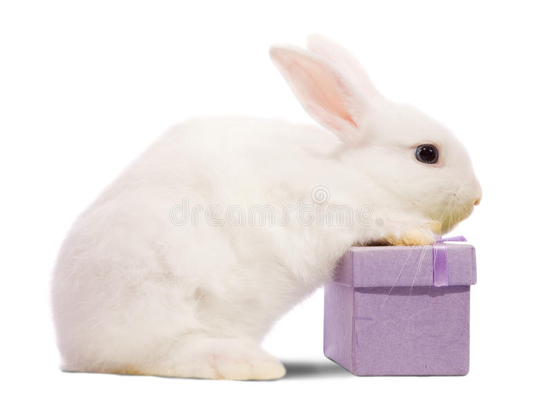 Rabbit with present box royalty free stock image