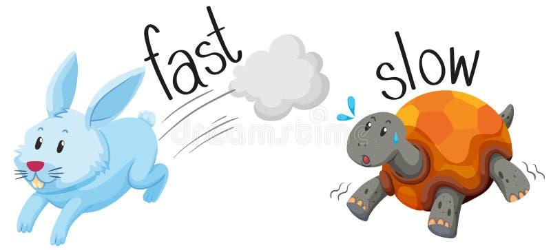 Rabbit runs fast and turtle runs slow vector illustration